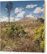 Gorse Bush On Mountain Approach Wood Print