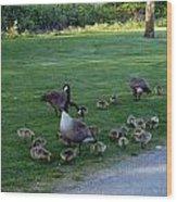 Gosling Daycare  Wood Print