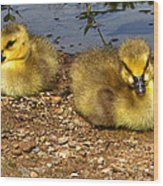 Goslings 001 Wood Print