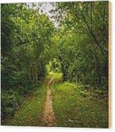 Gosnell Big Woods Trail Wood Print