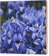 Got The Iris Blues Wood Print