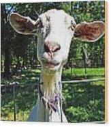 Got Your Goat Wood Print