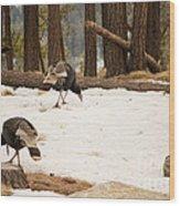 Gould's Wild Turkey Wood Print