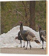 Gould's Wild Turkey Iv Wood Print