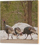 Gould's Wild Turkey V Wood Print