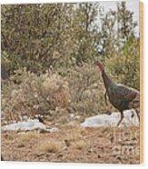 Gould's Wild Turkey Vii Wood Print
