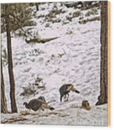 Gould's Wild Turkey Viii Wood Print
