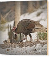 Gould's Wild Turkey Vix Wood Print