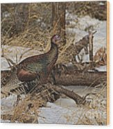 Gould's Wild Turkey Xiii Wood Print
