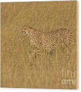 Grace And Elegance Wood Print by Ashley Vincent