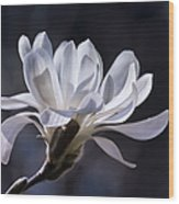 Grace - No. 2 Wood Print