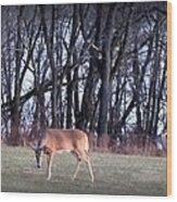 Graceful Deers Wood Print by Jose Lopez