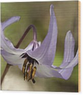 Graceful Fawn Lily Wood Print