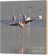 Graceful Flamingo Dance Wood Print