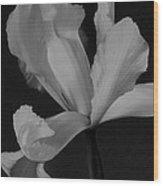 Graceful In Monochrome  Wood Print