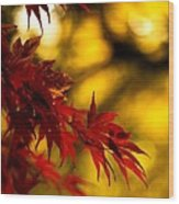 Graceful Leaves Wood Print