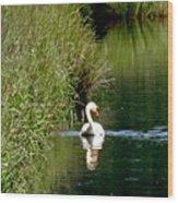 Graceful Swan Wood Print by Lizbeth Bostrom