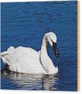 Graceful Swan Wood Print by Rebecca Cozart