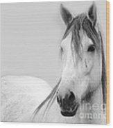 Gracie Grey Wood Print by Lynda Dawson-Youngclaus