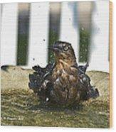 Grackle In The Bird Bath 1 Wood Print