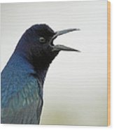 Grackle Wood Print