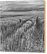 Grain Field Tracks Wood Print