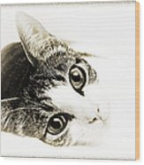 Grand Kitty Cuteness 3 High Key Wood Print