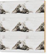 Grand Kitty Cuteness Bw 9 Wood Print