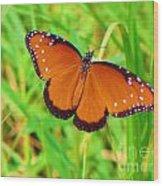 Grand Monarch Wood Print