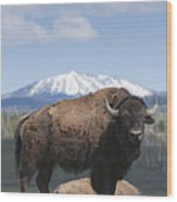 Grand Tetons Bison Wood Print by Charles Warren