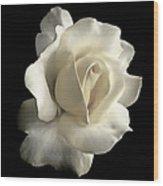 Grandeur Ivory Rose Flower Wood Print
