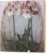 Grandmas Amaryllis Garden Wood Print