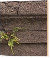 Granite Fern   #5708 Wood Print