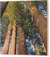 Grants Grove's Treasure Wood Print