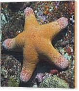 Granulated Seastar Wood Print by Science Photo Library
