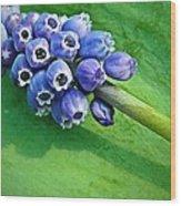 Grape Hyacinth Spike  Wood Print