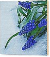 Grape Hyacinths In Snow Wood Print
