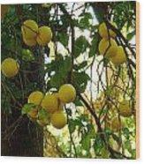 Grapefruits Wood Print