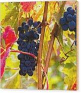 Grapes And Autumn Leaves, Napa California Wood Print