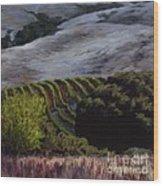Grapes And Oaks Wood Print