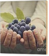 Grapes Harvest Wood Print by Mythja  Photography