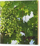 Grapes In A Vineyard Wood Print