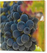 Grapes On The Vine Wood Print