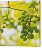 Grapes On The Vine - Finger Lakes Vineyard Wood Print