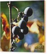 Grapes On The Vine In Square  Wood Print by Neal Eslinger