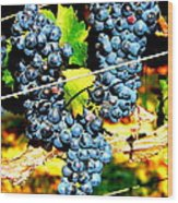 Grapes On The Vine Wood Print by Kay Gilley
