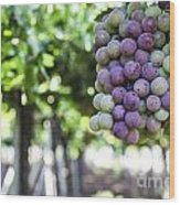 Grapes On Vine 2 Wood Print
