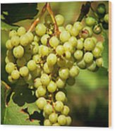 Grapes - Yummy And Healthy Wood Print