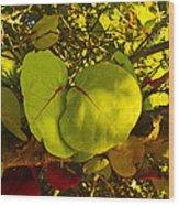 Grapetree Canopy Wood Print