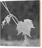 Grapevine  Wood Print by Heather L Wright